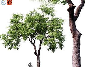 3D model Fraxinus excelsior 01 branch