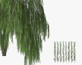 Willow tree 02 3D model