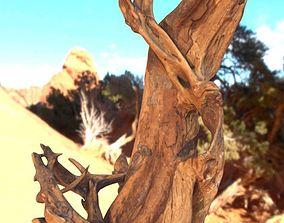Real Wood Root-2 3D model