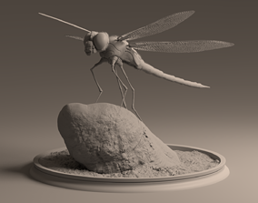 Dragon Fly 3D