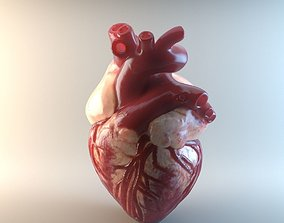 Medical model-Heart hollow-modeled low-poly