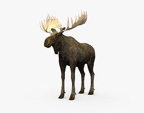 Moose HD 3D