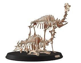 Couple Camel Cranium 3D asset