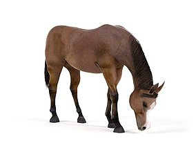 Horse Brown 3D model