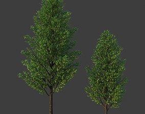 3D model XfrogPlants Field Maple - Acer Campestre