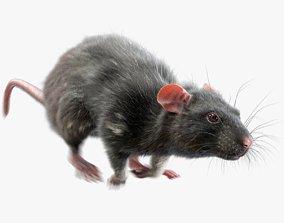 3D model Rat Fur Animated Black