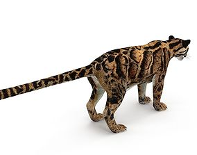 3D model Leopard