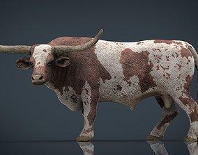 Texas Longhorn 3D model