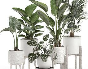 Decorative plants for the interior in white pots 557 3D