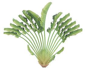 3D Crane Flower Plant