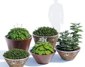 Pitocca planter 3D model