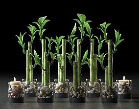 leaf Lucky Bamboo Centerpiece 3D
