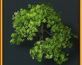 3D model Tree - set 02
