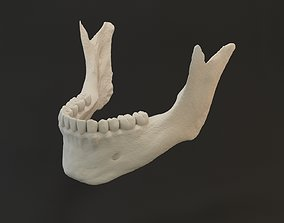 3D Jaw with teeths