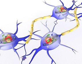 3D model realtime Neuron