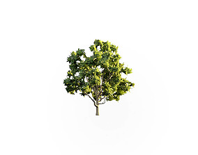 Low Poly Tree Stylish 3D asset low-poly