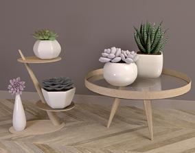 Pot plant - Succulents set 3D model