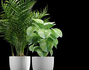 Decor plants set 1 3D