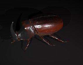 3D model low-poly Rhinoceros beetle