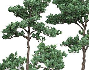 3D model Pine 5