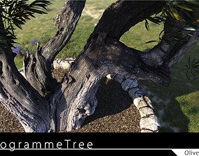Olive Tree 01 3D model