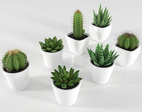 3D model game-ready Succulent and Cactus in pot