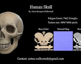 Human Skull 3D model game-ready PBR