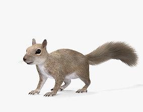 Squirrel HD 3D