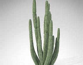 Organ Pipe Cactus 3D model