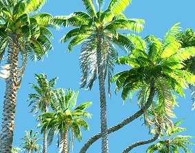 Animated Palm Trees 3D bush