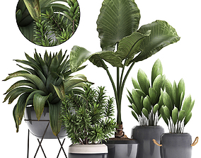 Collection of Exotic Plants 395 3D