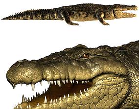 nature Crocodile 3D