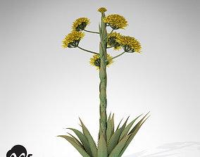 Desert Agave 3D model