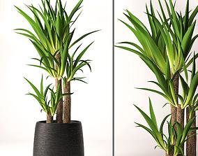 Yucca plant 3D