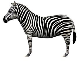 Zebra 3D model rigged