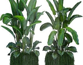 palm Collection Exotic plants 3D