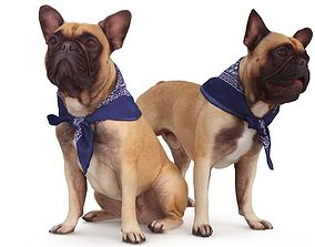 French Bulldog Collection x2 3D model