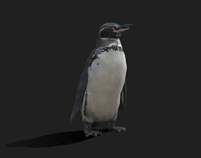 Galapagos Penguin - Animated 3D model
