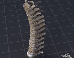 3D model Human Thoracic Vertebrae