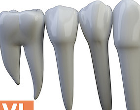 Teeth Low poly Turbosmooth 3D model