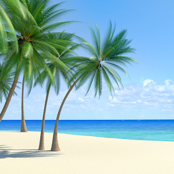Tropical beach scenes
