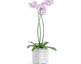 3D model Orchid Flower in Hexagonal Pot