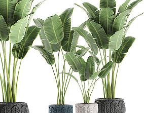 3D model Banana palms in classic flowerpot for the 1