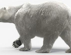 Bear-polar-maya 3D model
