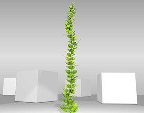 3D asset Grapevine Version 4