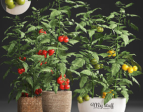 3D model Decorative plants for the kitchen 385 tomato