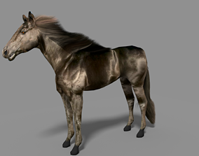 Black Stallion 3D asset