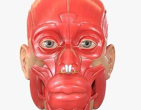 Full Head Muscle Anatomy 3D