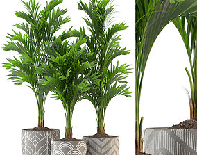 3D model Plants collection 321