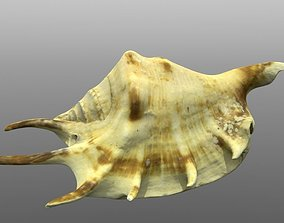 Sea shell low poly 3d model game-ready